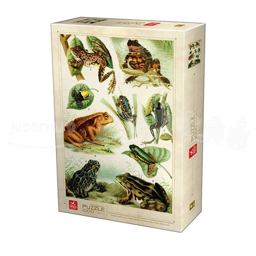 Encyclopedia - Frogs D75703